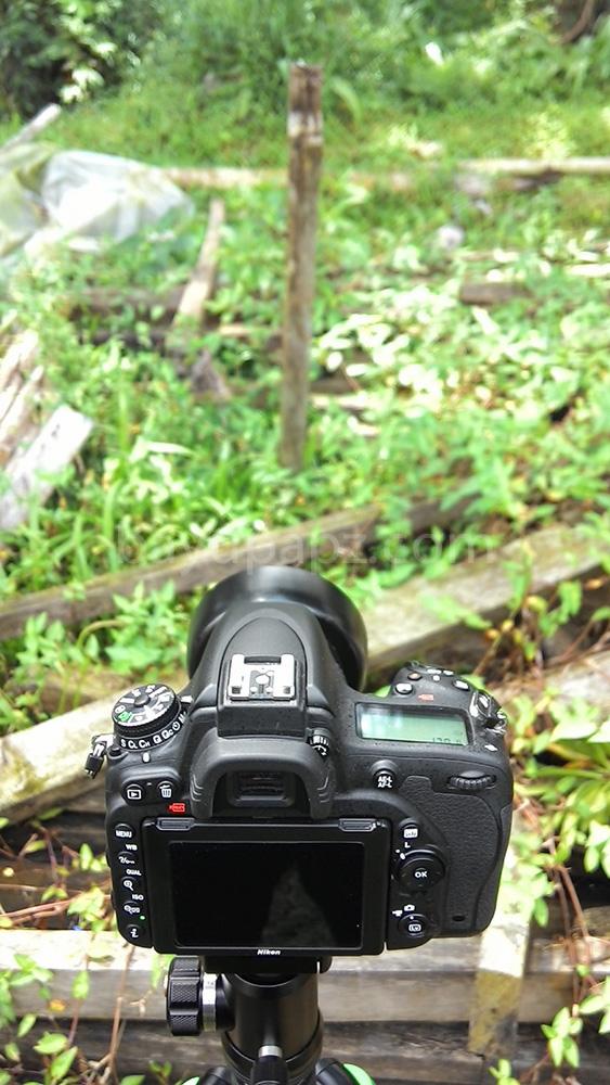 35mmvs50mm D750