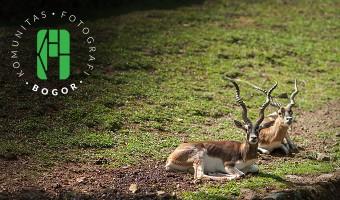 Hunting Taman Safari Indonesia Bareng Komunitas Fotografi Bogor