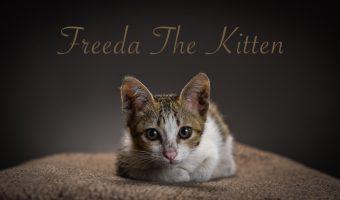 Strobist : Memotret Kucing Dengan Menggunakan Tiga Flash
