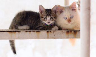 Kami, Tetangga, Teman dan Kucing